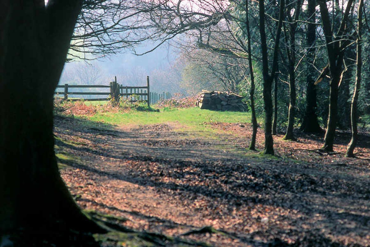 Energy park plan for Oswestry could 'scar the landscape'