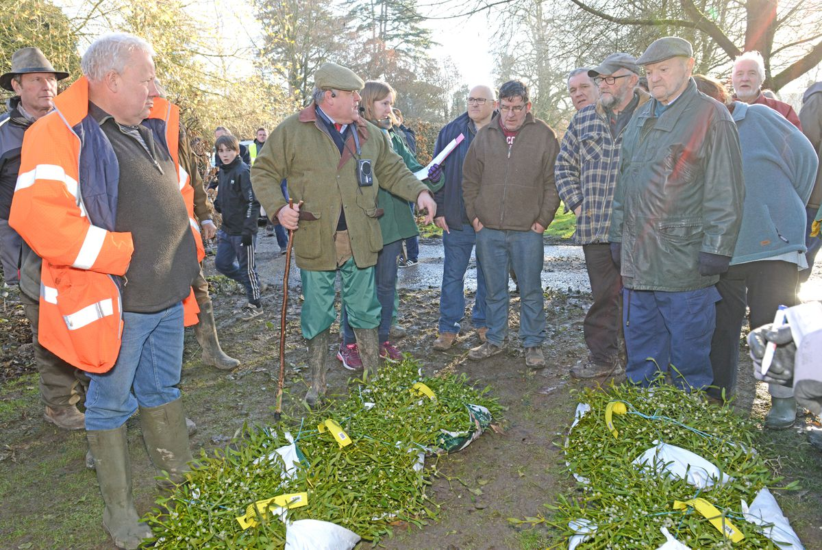 The mistletoe and holly auction in Tenbury Wells