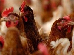 Anger over fresh bid for 216,000-bird farm in Shropshire