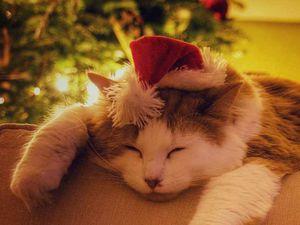 Star Witness: Christmas Pets