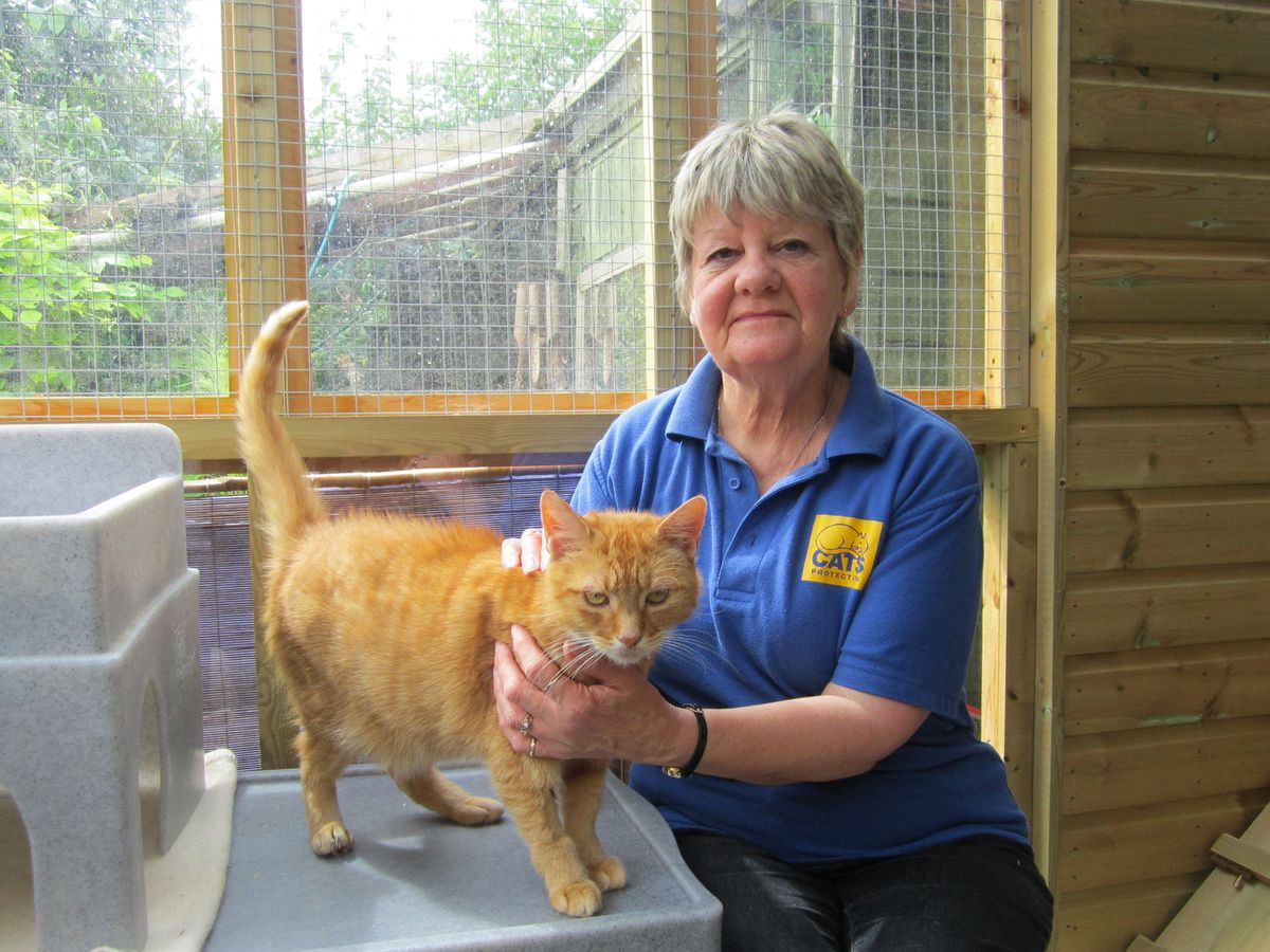 Two pensioners to attempt wing-walk for cats charity