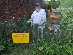 Buzzing with the bees - Taking care of the apiary at a stately home