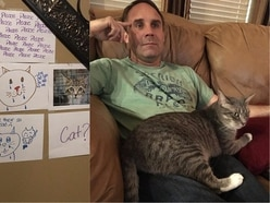 This hilarious girl made a 'wall of sorrow' to encourage her dad to get a cat – and it worked
