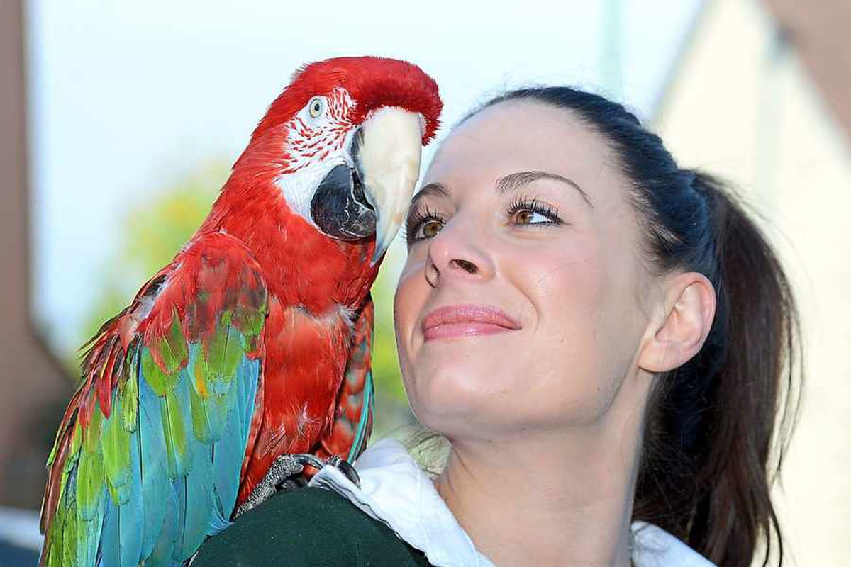 Happy birthday! Emma Small, manager at Becks Pets and Exotics, with Poncho the 90-year-old parrot