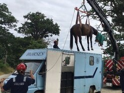 A horse named Moo: Fire crews rescue trapped animal near Shrewsbury - with video and pictures