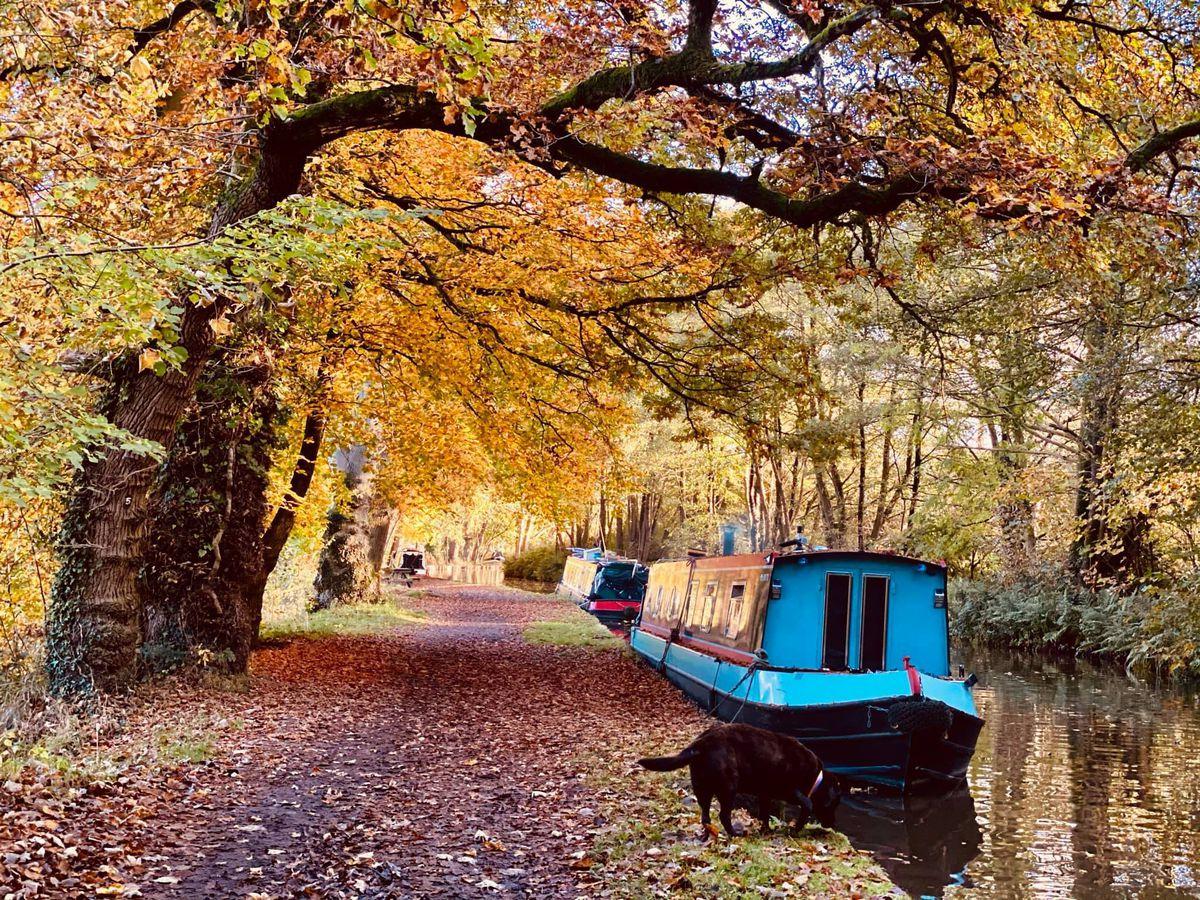 Joanna Hughes took this photograph of the Llangollen Canal near Ellesmere