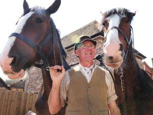 Shire horses with Steve Ledsham