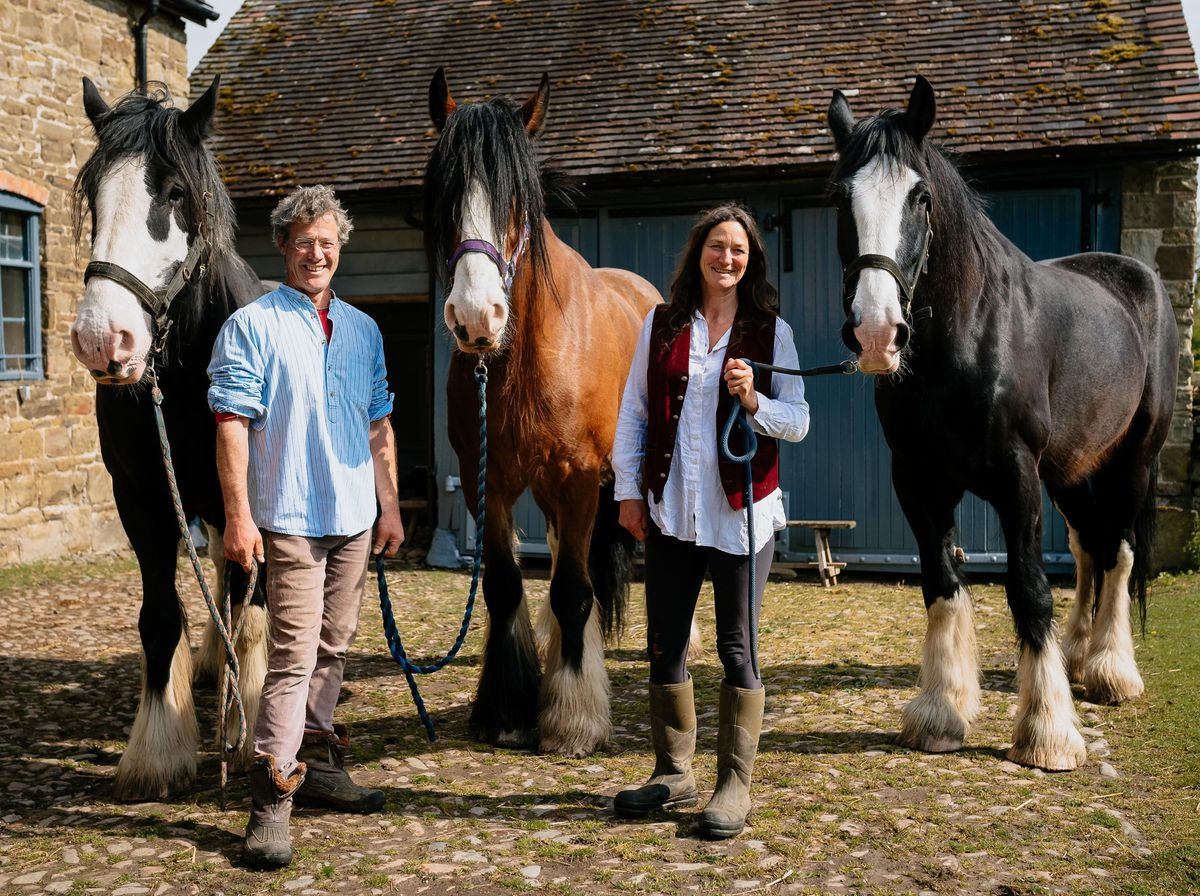 Watch Alfie William And Joe The Hardworking Shire Horses Delight Viewers Online From Shropshire Farm Shropshire Star