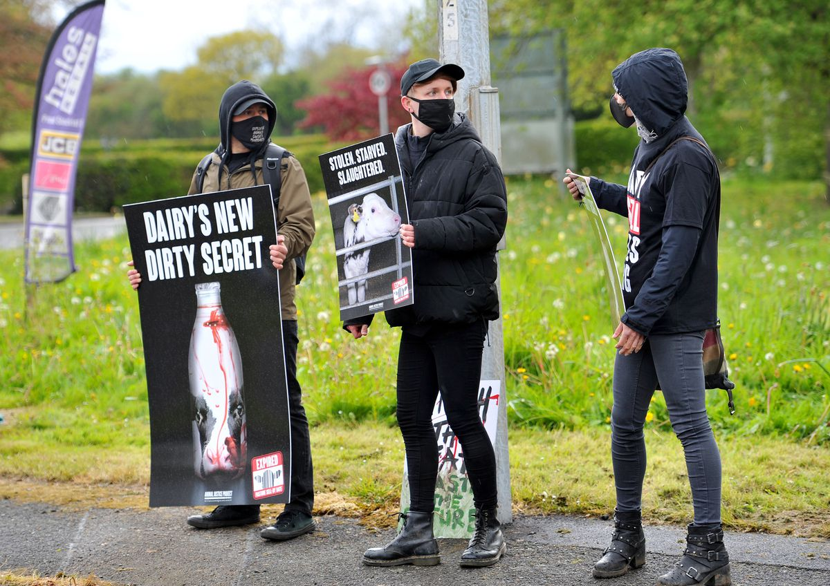 Some of the signs referred to 'dairy's dirty little secret' and the protesters moved on to Müller