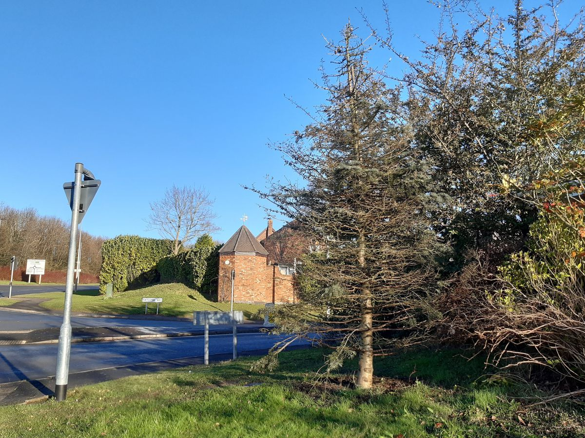 "A Christmas tree on the corner of Gatcombe Way and Castle Farm Way, Priorslee, Telford - one of two parish-funded trees killed by ""insufficient watering""."