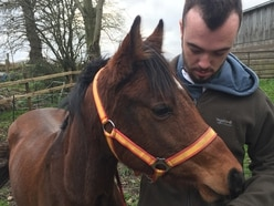 Couple banned from keeping horses after pony left to starve