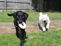 Devoted doggie duo in need of new home