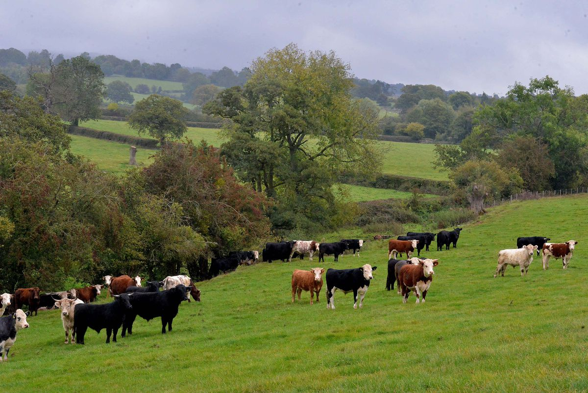 Further herds are to join the trials for a cattle vaccine in the coming months