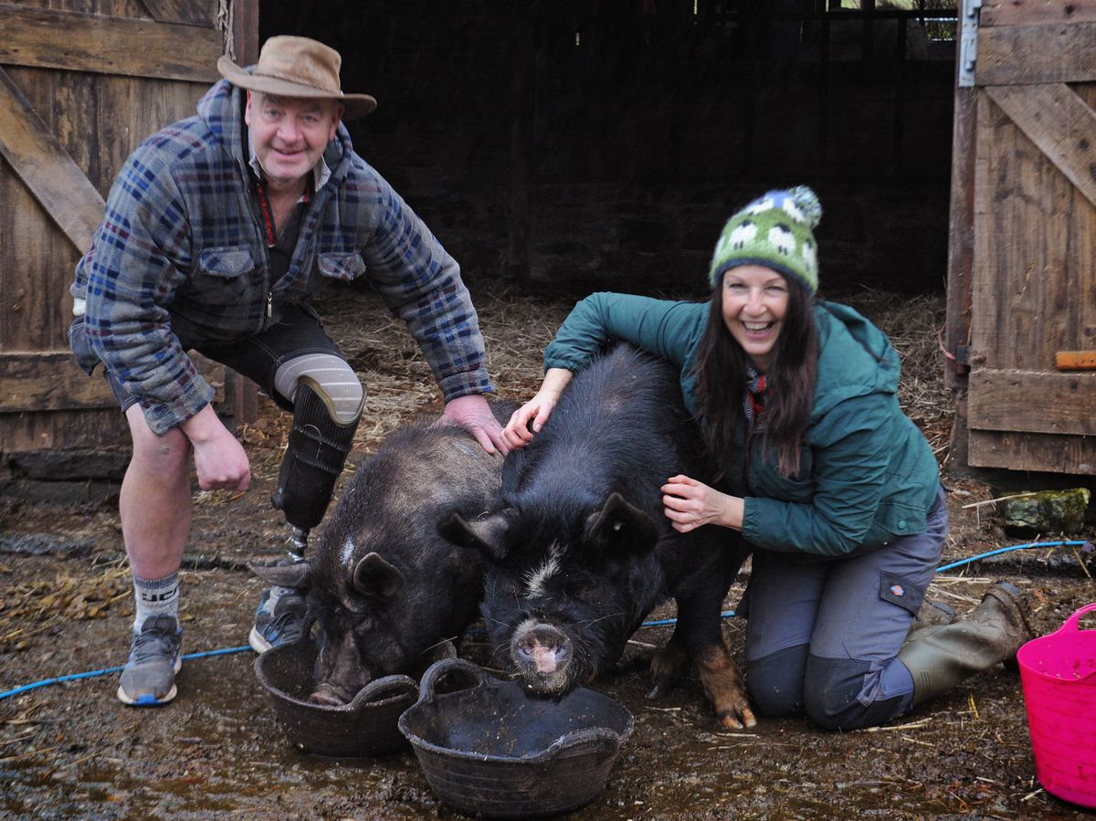 Safe and sound: James Gomersall and Tina Harkin, at Brookhouse Animal Sanctuary with pigs Priscilla, left, and Truffles