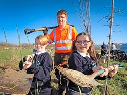 Volunteers help to re-plant trees deliberately killed in Shrewsbury