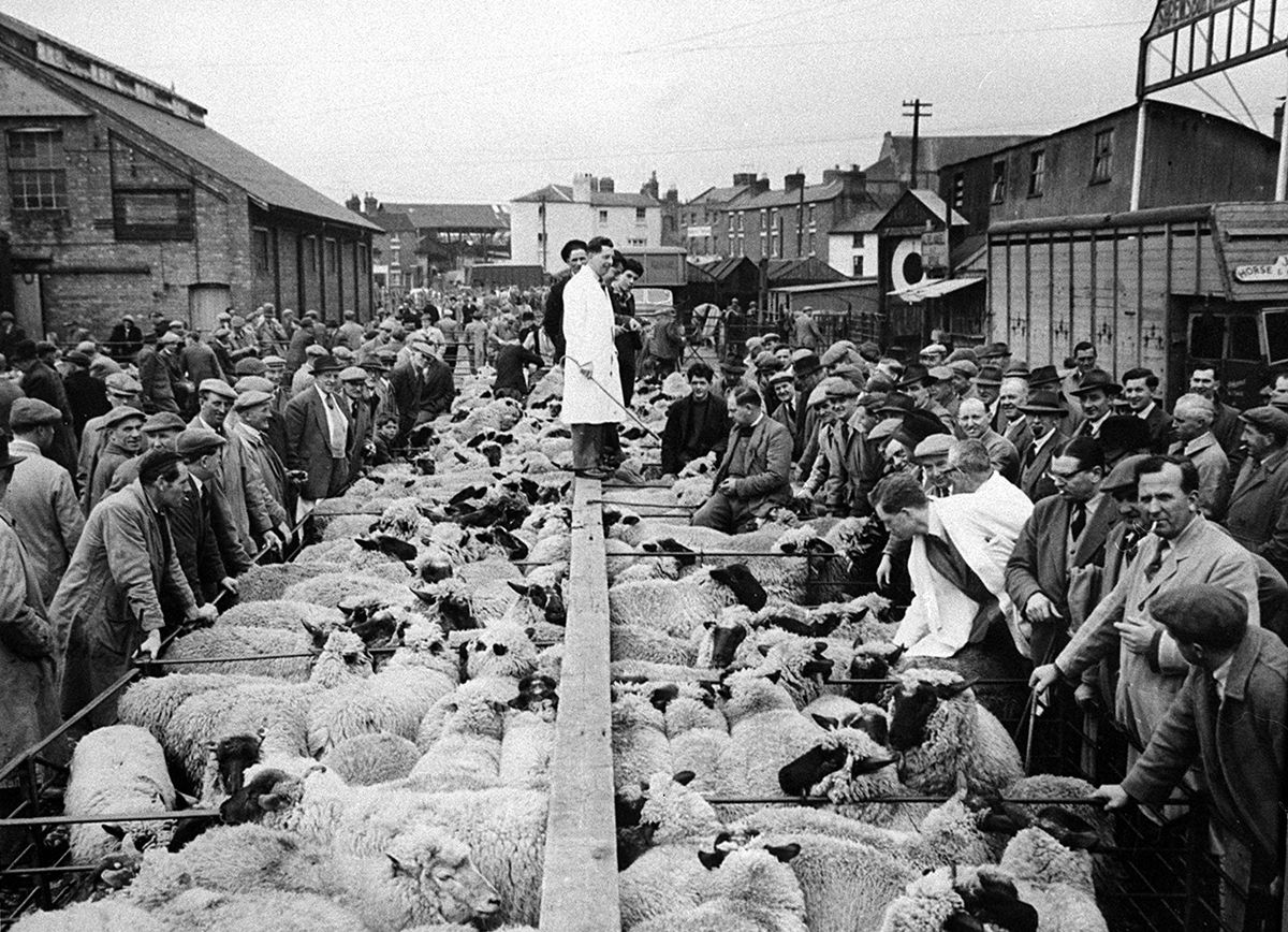 """This picture shows the Shrewsbury livestock market at its old site close to the River Severn in the town centre. The gentleman in the white coat is Derek Pugh who conducted the last ever sheep auction at the site in 1959. It afterwards moved to Harlescott. On the right was the entrance to the Raven Repository with a sign above saying """"Shrewsbury Horse Sales."""""""
