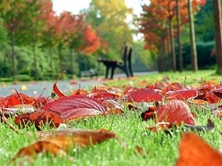 Sarah Cowen-Strong: Autumn brings out my inner child