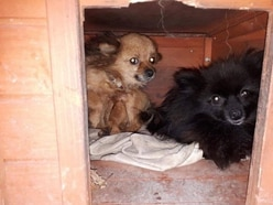 More than 50 dogs seized from 'deplorable' conditions as five arrested in Telford