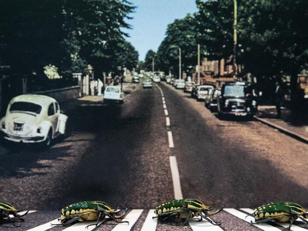 London Zoo recreates The Beatles album cover with beetles