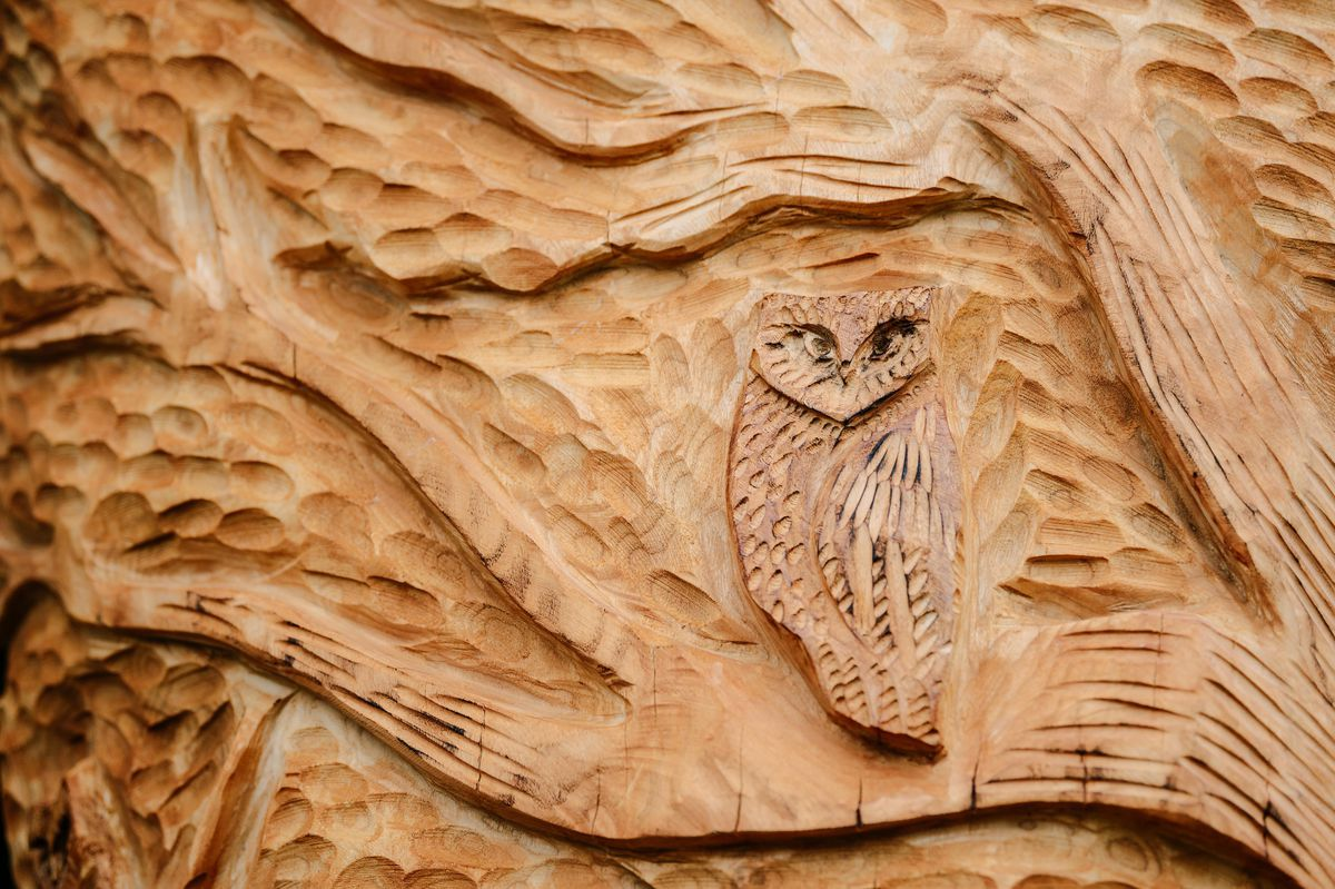 An owl carved into the tree in Meole Brace