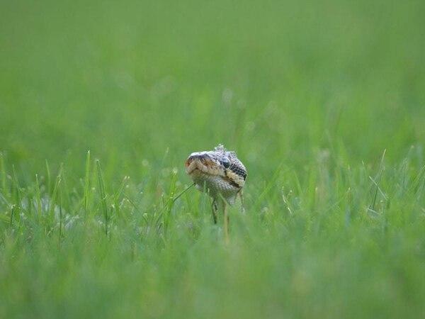 Cricket match held up by snake on pitch