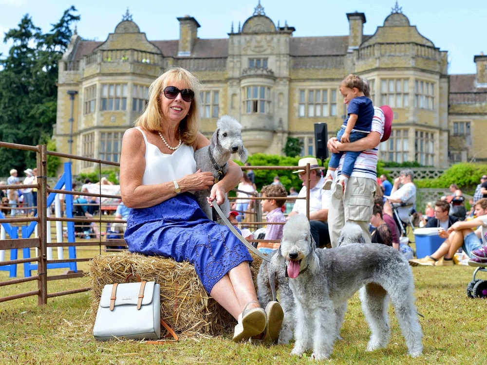 Thousands take part in Ludlow dog day - in pictures and video