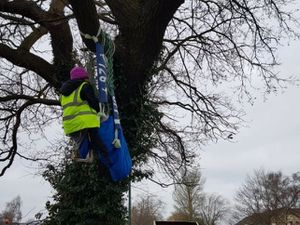 A protester sat on the tree in Featherbed Lane, Shrewsbury