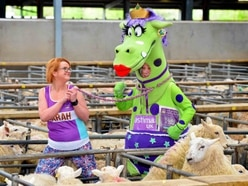 WATCH: Super Puffina put through paces at livestock market charity auction