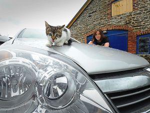Listen to that engine purr: Kitten found under bonnet of car by Shrewsbury driver