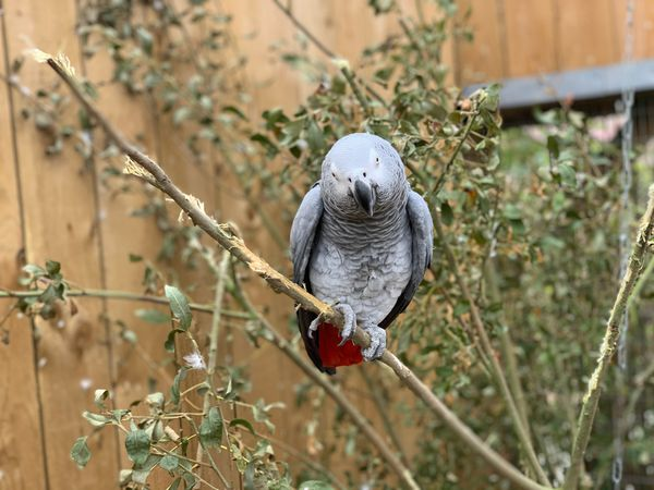 Parrots separated after learning to swear