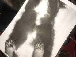 If you've ever wondered what a photocopy of a cat is like, look no further