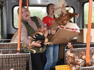 Diana McChesney, 45, from Lisbellaw, County Fermanagh, used a local bus which is more commonly rented for hen parties, to rescue more than 1000 hens