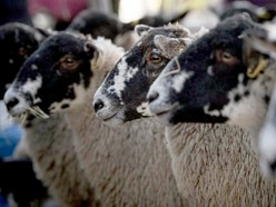 How Shropshire's sheep farmers took centre stage at BBC Tory debate