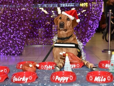 London Luton airport holds Christmas party for security dogs