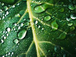 This photo of a leaf with dew drops was taken by Luci Clark from Clun