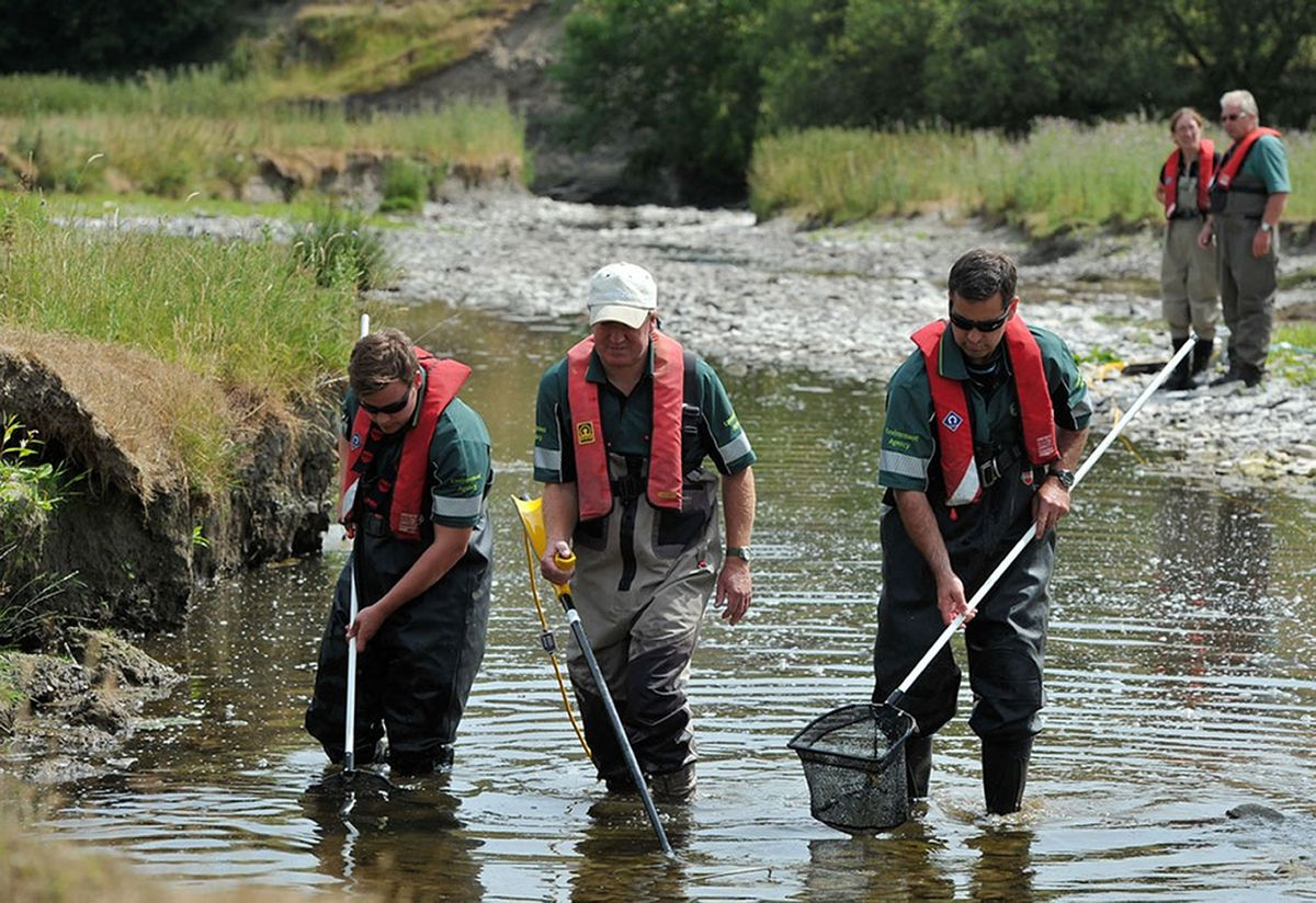 River Teme fish rescue in Leintwardine, 2013