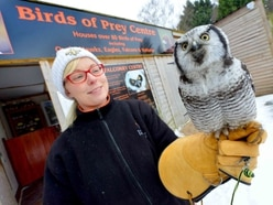 A day out at The Falconry Centre at Webbs of Hagley