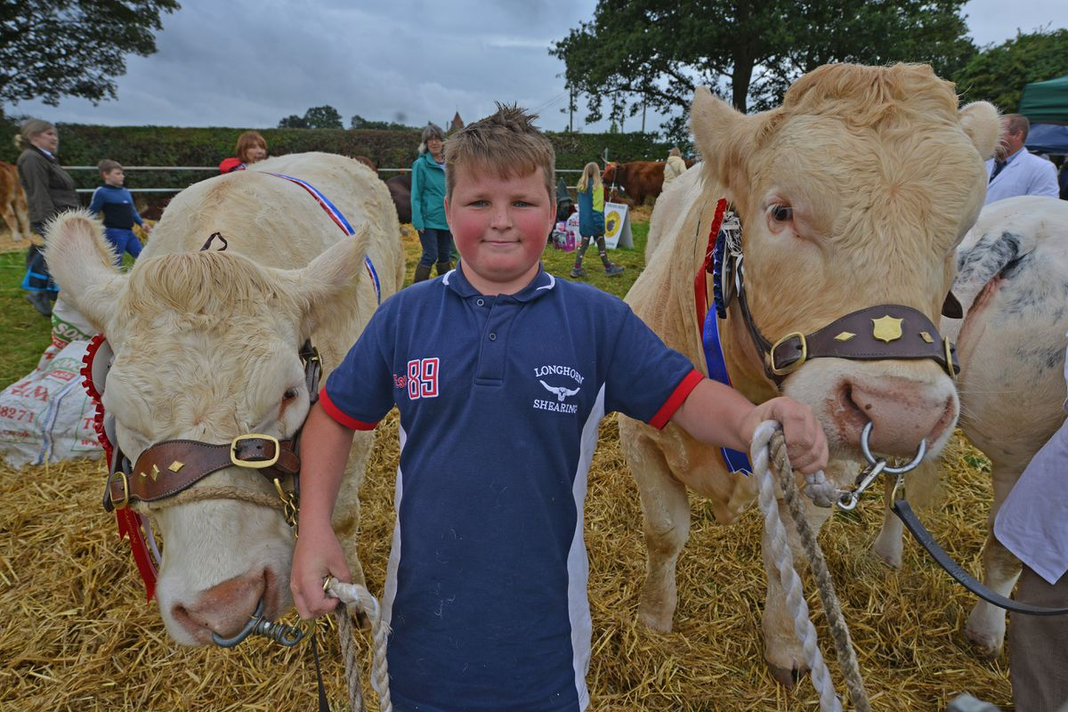 Among the proud livestock exhibitors at Minsterley Show was Evan Williams, from Caersws, with his Charolais cattle