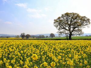 A field in bloom at Cressage. Photo: Steven Sneade.