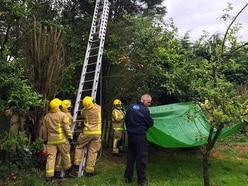 Bella the cat rescued from three-day tree ordeal