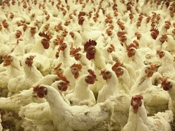 Bridgnorth chicken farm fight going to High Court