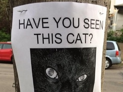This 'missing cat' poster is so funny you'll wish you had come up with the idea