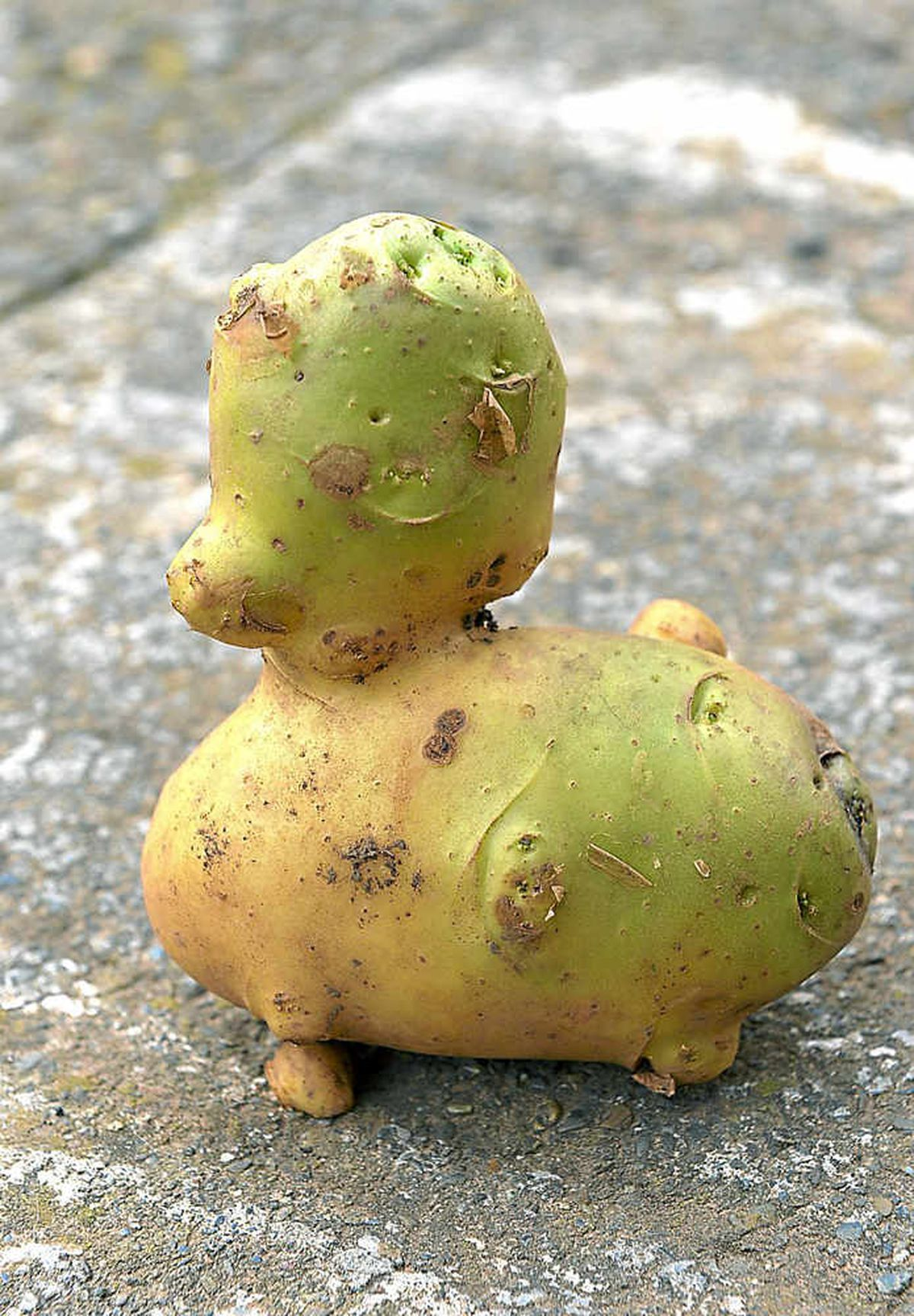 Dorothea Clinton's duck-shaped potato