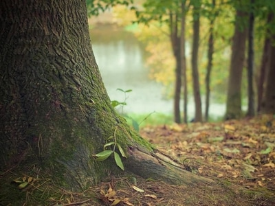 Shropshire town to get 40 new trees in fundraising scheme