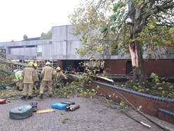 Tree falls onto pedestrian in Market Drayton
