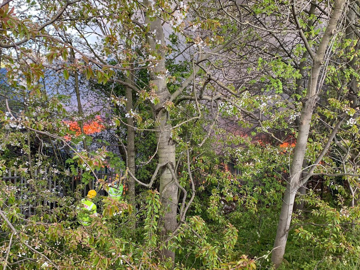 Flames can be seen through the undergrowth. Photo: @SFRS_MDrayton