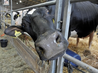 Let's get a moove on now with Brexit, say farmers - with video