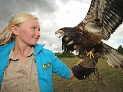 Eagle has landed at Wild Zoological Park