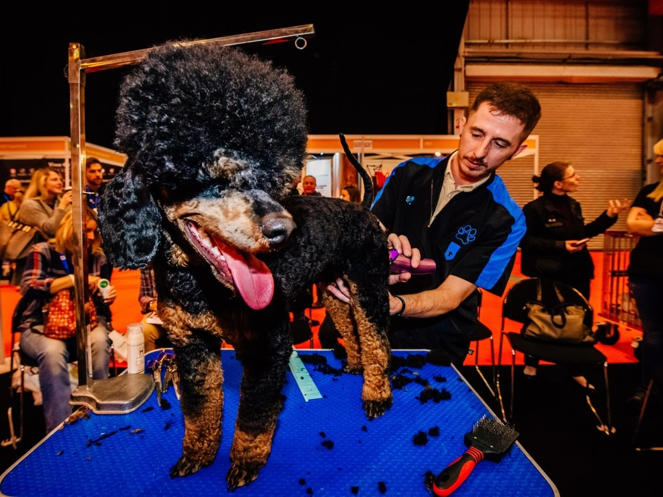 Thousands descend on pet trade show in Telford