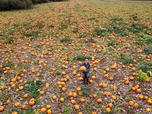 Richard Jones, owner of Llynclys Hall Farm Shop is surrounded by thousands of pumpkins ready to be harvested